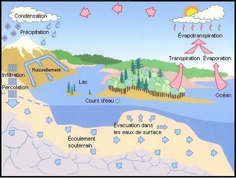 Schma illustrant le cycle de leau  la vapeur deau se condense pour former des nuages les nuages prcipitent ventuellement sous forme de pluie de neige ou de grle leau ruisselle vers les lacs et cours deau ou sinfiltre dans le sol leau se transforme en vapeur deau sous leffet de lvaporation des tendues deau et de la transpiration des vgtaux vapotranspiration pour se retrouver dans latmosphre bouclant ainsi la boucle du cycle de leau